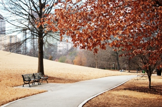 Autumn In Park Background for Android, iPhone and iPad