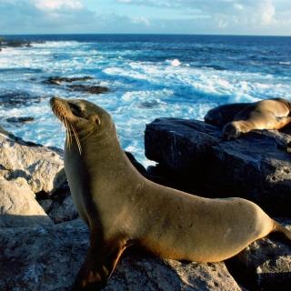 Seal And Stones - Obrázkek zdarma pro 2048x2048
