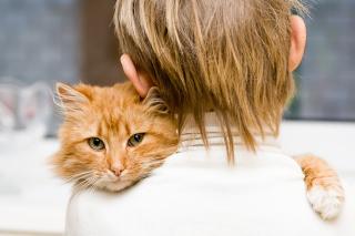 I Love My Cat - Obrázkek zdarma pro Sony Xperia E1