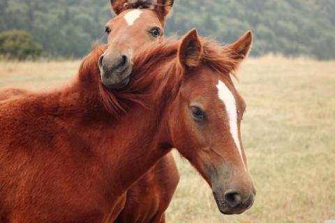 Собака друг, лошадь помощник