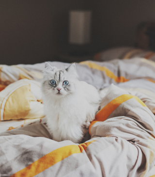 White Cat With Blue Eyes In Bed - Obrázkek zdarma pro 240x320