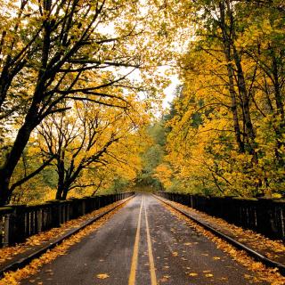 Wet autumn road - Obrázkek zdarma pro iPad 2