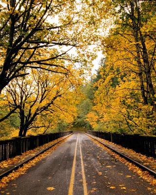 Wet autumn road - Obrázkek zdarma pro Nokia Asha 309