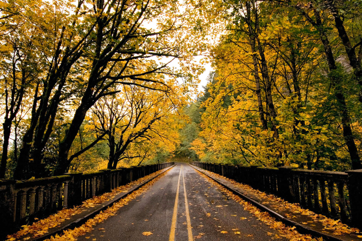 Wet autumn road wallpaper