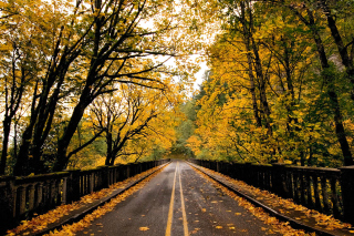Wet autumn road Picture for Android, iPhone and iPad