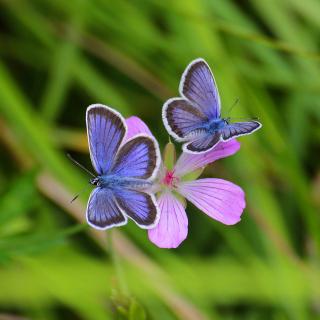 Butterfly on Grass Bokeh Macro - Obrázkek zdarma pro 208x208