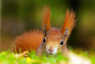 Funny Little Squirrel Wallpaper for Android, iPhone and iPad