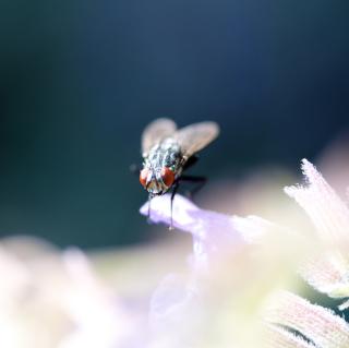 Fly Macro - Obrázkek zdarma pro 208x208