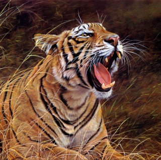 Tiger In The Grass - Obrázkek zdarma pro iPad 3