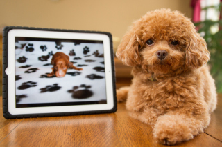 Plush Brown Dog Background for Android, iPhone and iPad