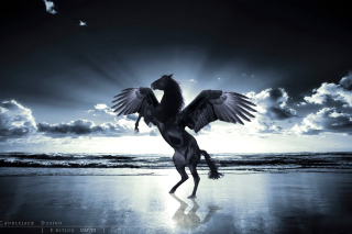 Pegasus - Obrázkek zdarma pro Nokia Asha 200
