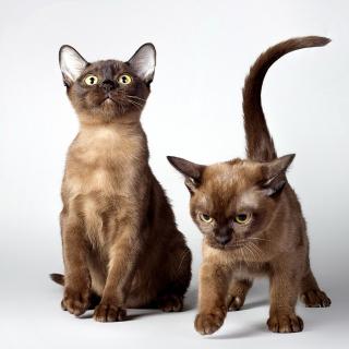Two kittens - Obrázkek zdarma pro 1024x1024