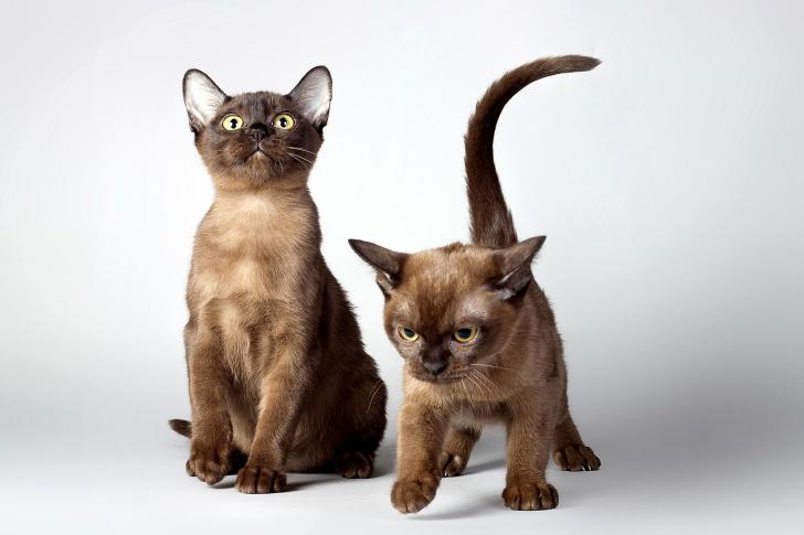 Two kittens wallpaper