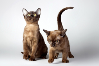 Two kittens Picture for Android, iPhone and iPad