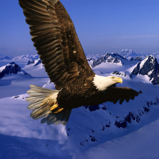 American Eagle - Obrázkek zdarma pro 208x208