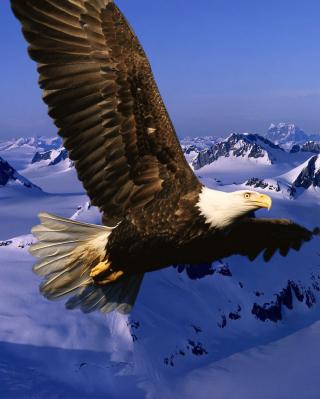 American Eagle - Obrázkek zdarma pro 240x320
