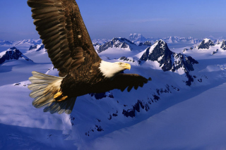American Eagle Wallpaper for Android, iPhone and iPad