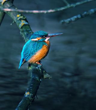 Kingfisher On Branch - Obrázkek zdarma pro 128x160