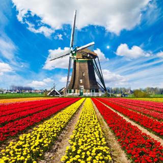 Tulips Field In Holland HD - Obrázkek zdarma pro 128x128