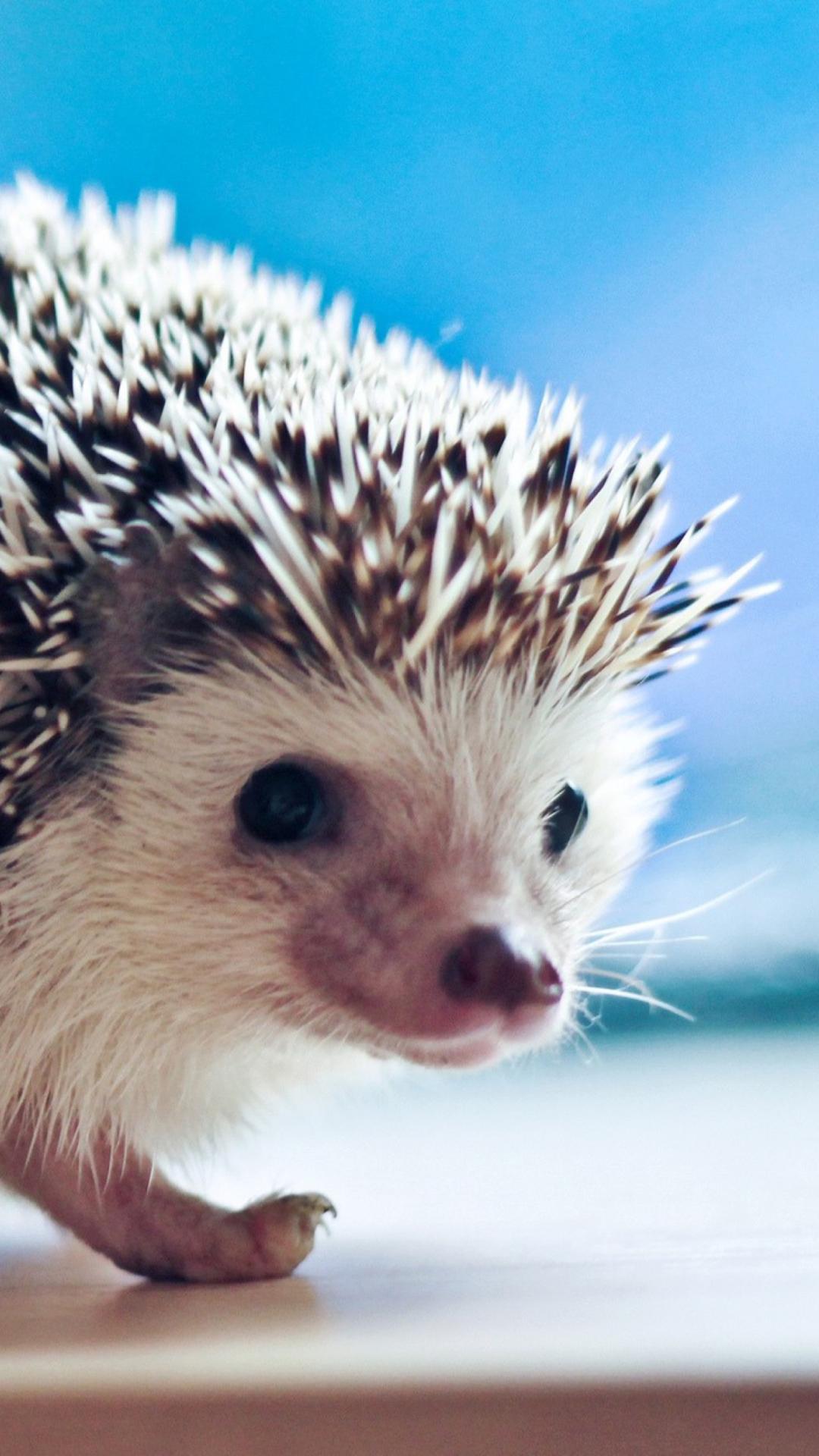 cute hedgehog wallpaper for iphone 6 plus