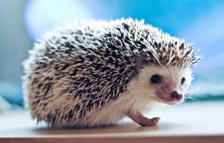 Cute Hedgehog Background for Android, iPhone and iPad