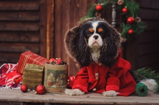 Dog Cavalier King Charles Spaniel in Christmas Costume - Obrázkek zdarma pro Widescreen Desktop PC 1920x1080 Full HD