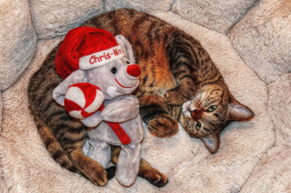 Lazy cat with Toy HD Wallpaper for Android, iPhone and iPad