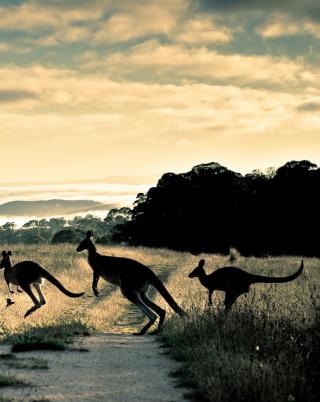 Kangaroo - Obrázkek zdarma pro 128x160
