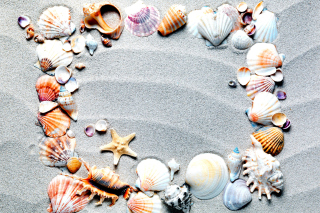 Australian Seashells Favors sfondi gratuiti per cellulari Android, iPhone, iPad e desktop