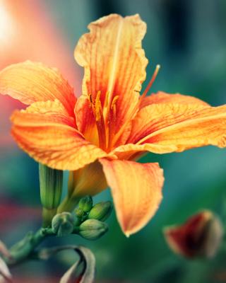 Orange Lily - Obrázkek zdarma pro iPhone 5S