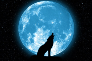 Free Wolf And Full Moon Picture for Android, iPhone and iPad