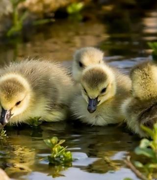 Little Ducklings - Obrázkek zdarma pro iPhone 5S
