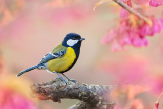 Bird On Branch Background for Android, iPhone and iPad
