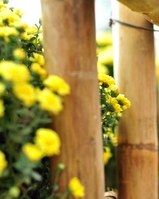 Macro fence - Obrázkek zdarma pro Nokia Asha 202