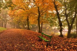 Autumn in Patterson Park - Fondos de pantalla gratis para LG E400 Optimus L3