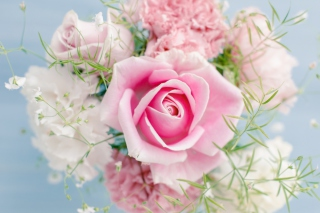 Free Beautiful Pink Rose Picture for Android, iPhone and iPad