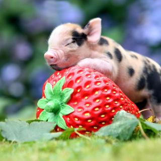 Pig and Strawberry - Obrázkek zdarma pro iPad mini