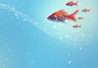 Goldfish - Obrázkek zdarma pro Nokia XL