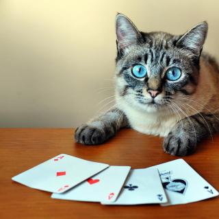 Cat The Winner - Obrázkek zdarma pro iPad mini