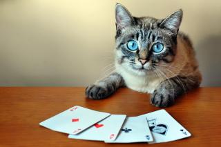Cat The Winner - Obrázkek zdarma pro Samsung Galaxy Tab 4 7.0 LTE