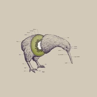 Kiwi Bird - Obrázkek zdarma pro iPad 3
