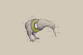 Free Kiwi Bird Picture for Android, iPhone and iPad
