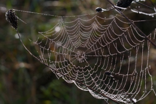 Wet Cobweb Picture for Android, iPhone and iPad
