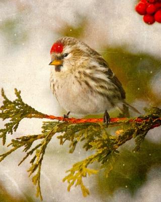 Redpoll bird - Obrázkek zdarma pro Nokia 5233