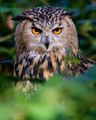 Owl - Obrázkek zdarma pro 320x480