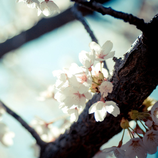 Bloom Tree - Obrázkek zdarma pro iPad mini 2