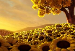 Sunflower World - Obrázkek zdarma pro Widescreen Desktop PC 1440x900