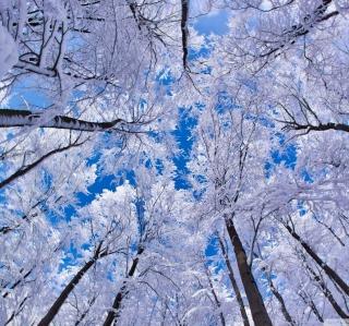 Winter Trees - Obrázkek zdarma pro 320x320