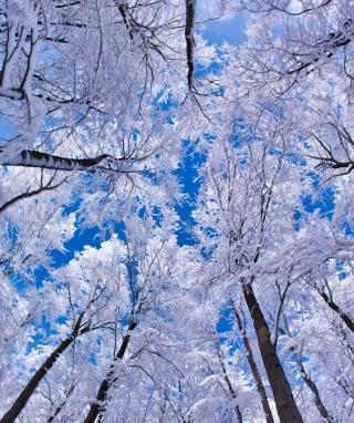 Winter Trees - Obrázkek zdarma pro 320x480