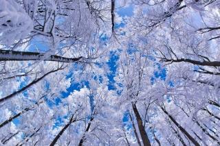 Winter Trees - Obrázkek zdarma pro Motorola DROID